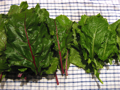 beet-turnip-greens-raw